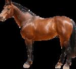 Tabela do Jogo do Bicho - Cavalo