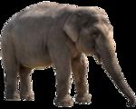 Tabela do Jogo do Bicho - Elefante