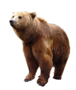 Tabela do Jogo do Bicho - Urso